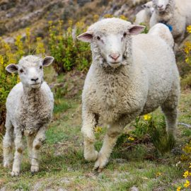 Feed my sheep: the second level of liturgical participation