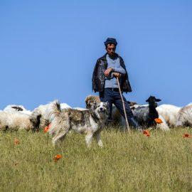 Shepherd to whom?