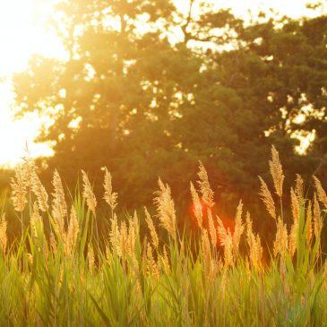 Bulletin Shorts for the Twenty-Sixth Sunday in Ordinary Time