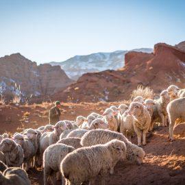 Choosing your shepherd